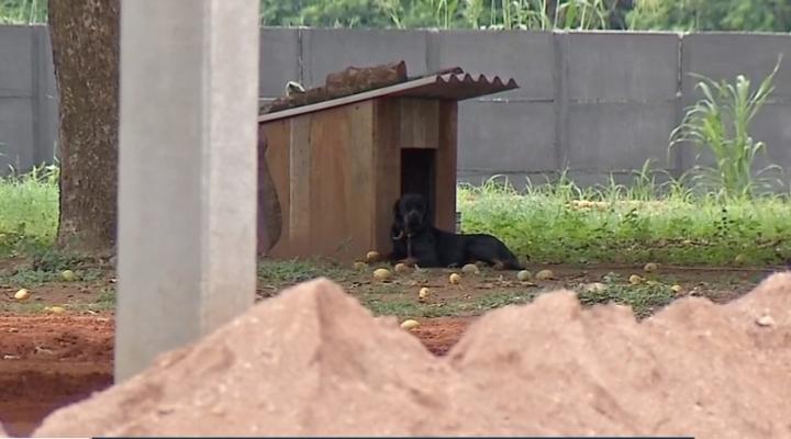 #Cão será monitorado após ataque e morte de criança de 1 ano e pode ser doado em MT