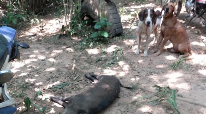 #Cachorros usados por caçadores são resgatados e polícia suspeita de maus-tratos em MT