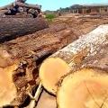 Decisão de  juíza  determina fechamento de madeireiras em Juína