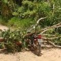 Motociclista morre após ser atingido por uma árvore