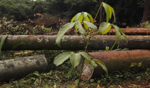 As indústrias madeireiras da região Noroeste intensificam os planos de ação em combate a pandemia do Covid-19