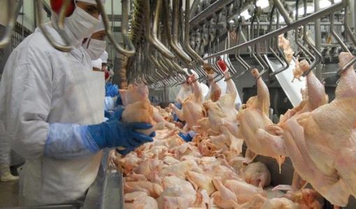 Filipinas suspendem temporariamente importações da carne de frango do Brasil por medo de coronavírus