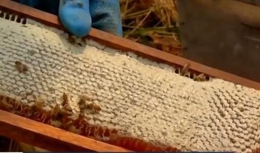 Fumaça de queimadas causa morte de abelhas e a produção de mel deve ser até 60% menor em MT