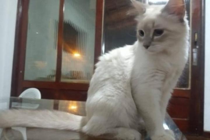 Cuiabá registra 1º caso de animal infectado pela Covid-19 no Brasil