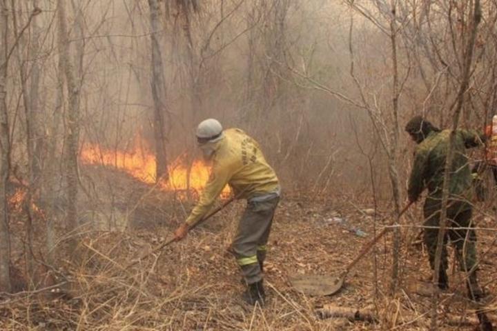 Técnicas de manejo do fogo são aplicadas no Pantanal de MT pela primeira vez para prevenir incêndios