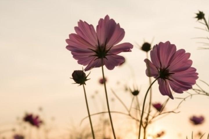 Equinócio: entenda o evento que marca o início da primavera