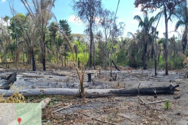 Justiça determina reintegração de posse em área invadida para desmatamento ilegal em MT