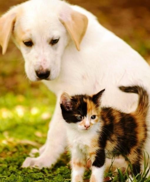 Campanha: Vacinação contra raiva para cães e gatos