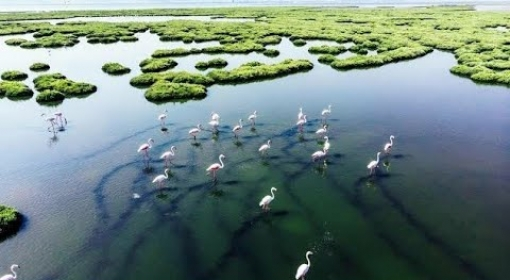 Brasil Secreto - Pantanal Selvagem - Documentário